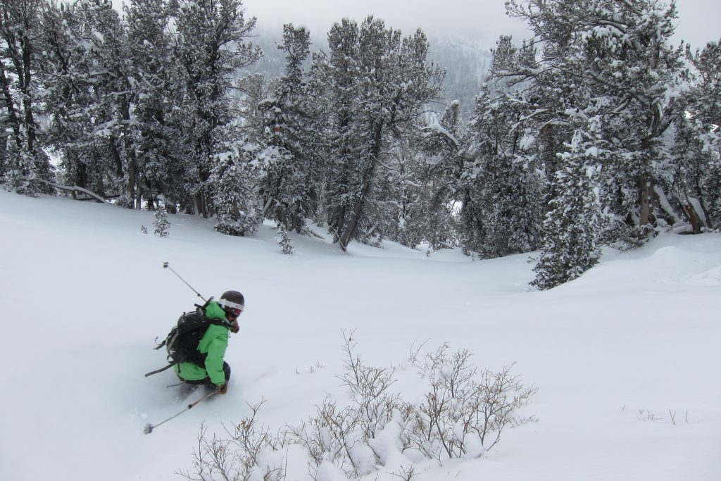 relay peak skiing the trees